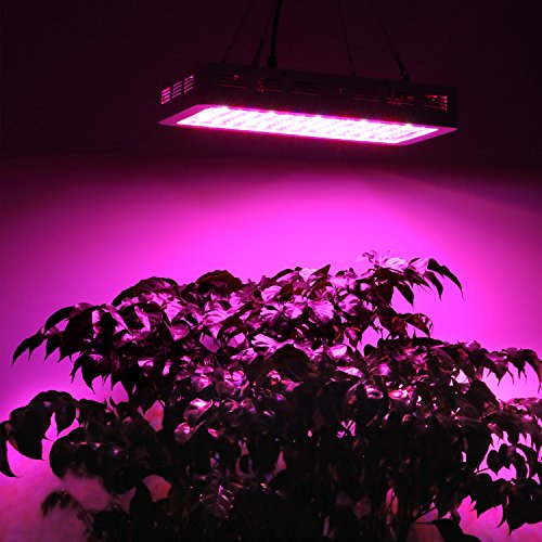 bestva-2000w-dual-chips-led-grow.info
